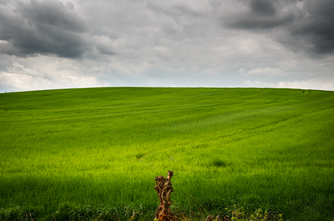 fot. Marta Reszka © 2015. Lonely tree on rye field.